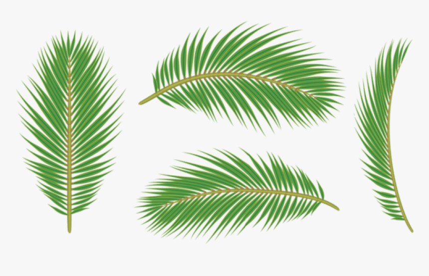 Palm Tree Leaves Png, Transparent Png, Free Download