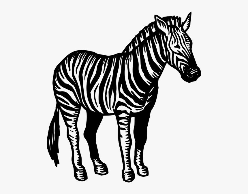 Transparent Zebra Head Png, Png Download, Free Download