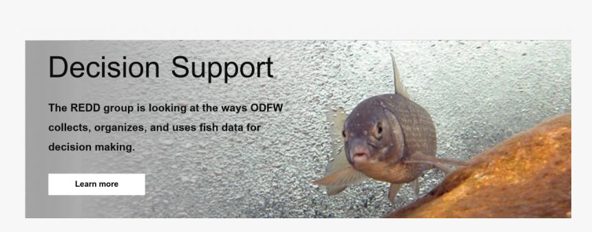 Fish Group Png, Transparent Png, Free Download