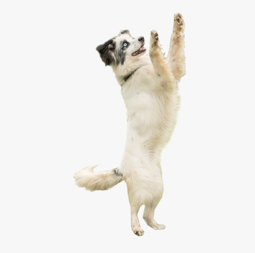 Dog Catching Png, Transparent Png, Free Download