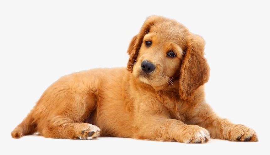 Dog Png, Transparent Png, Free Download