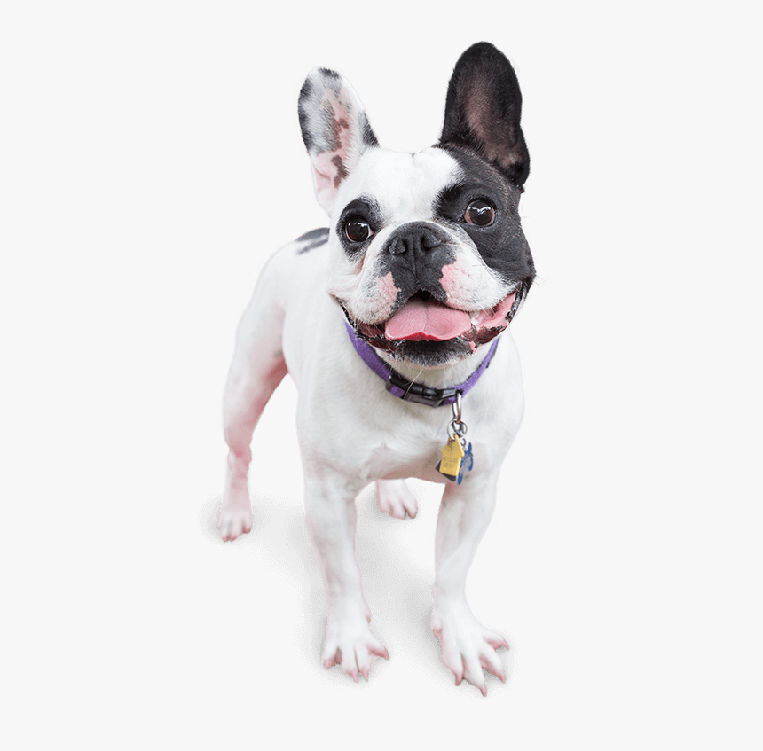 Image Of A Happy Dog - Happy Dog Png, Transparent Png, Free Download