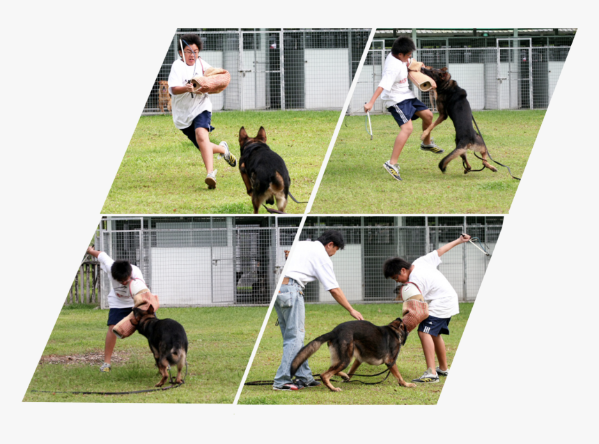 Dog Catches Something, HD Png Download, Free Download