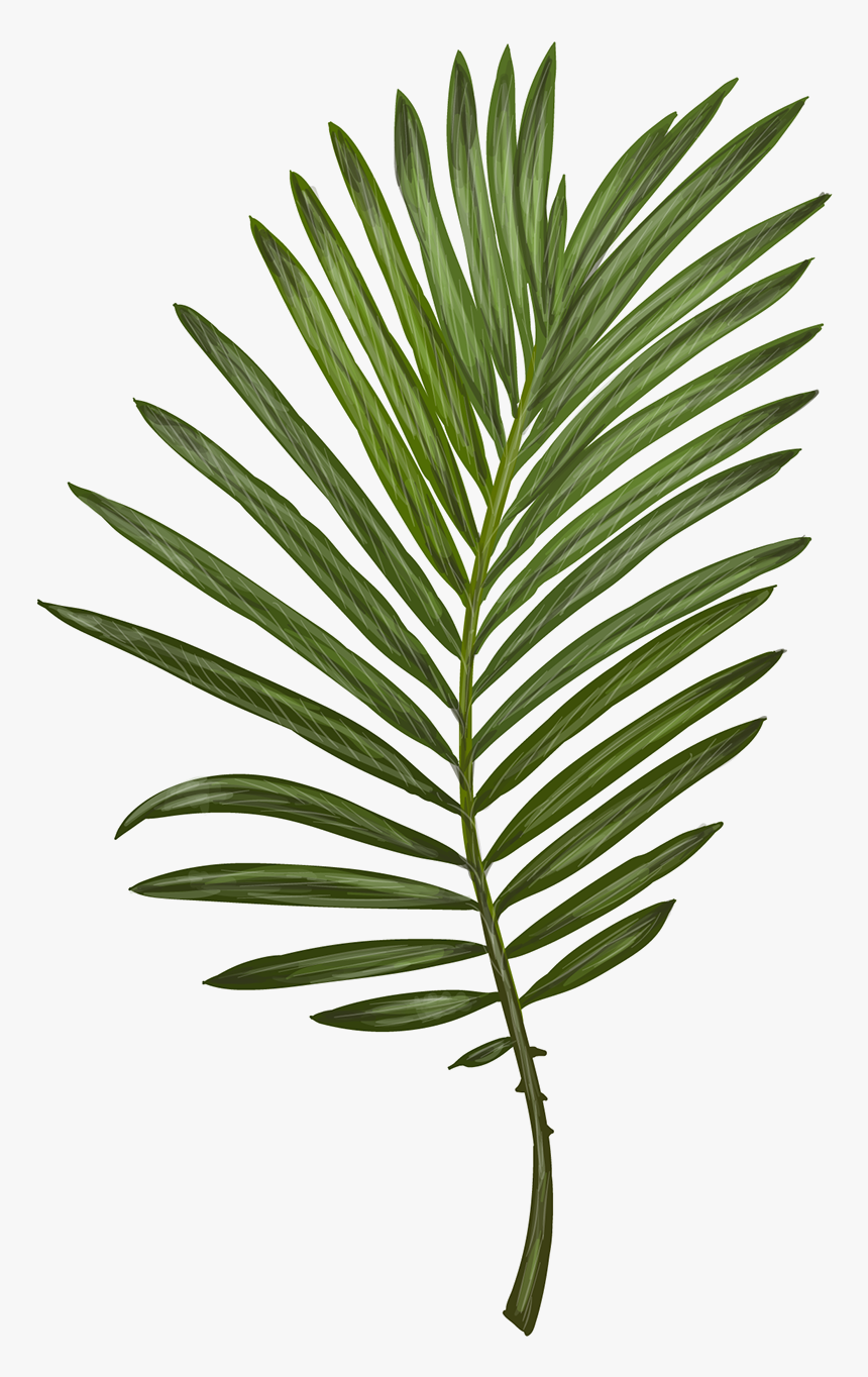 Transparent Tropical Leaves Png Clip Art Fern Leaf Png Download Kindpng The most common real leaf tropical material is metal. transparent tropical leaves png clip
