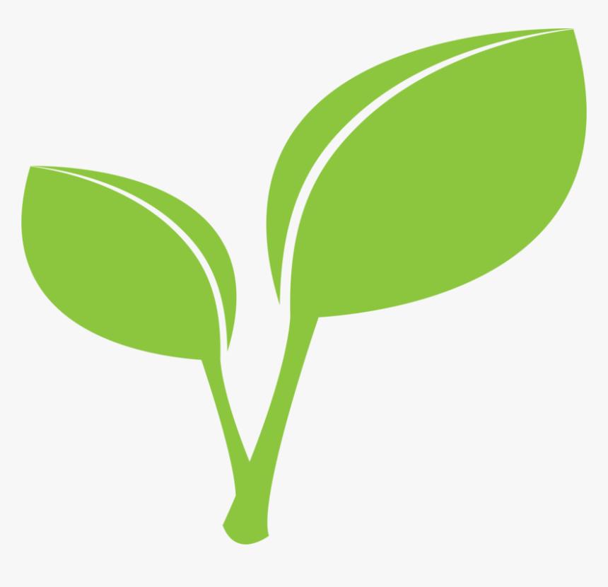Plant,grass,leaf - Leaf And Stem Clipart, HD Png Download, Free Download