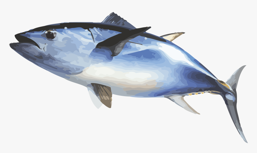 Fish Ecosia Inewconcom Your Transparent Background - Bluefin Tuna Fish Transparent, HD Png Download, Free Download
