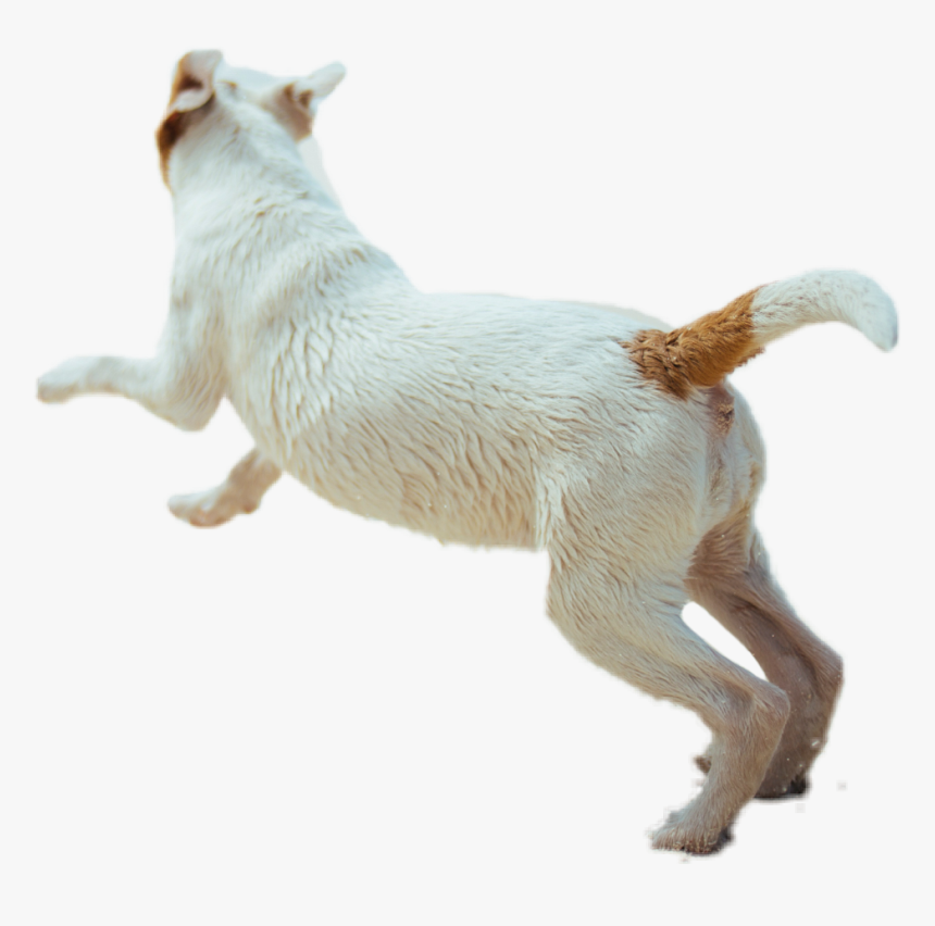 #dog #animal #running #fast #puppy #cute #dogrunning - Dog Running Side View Png, Transparent Png, Free Download