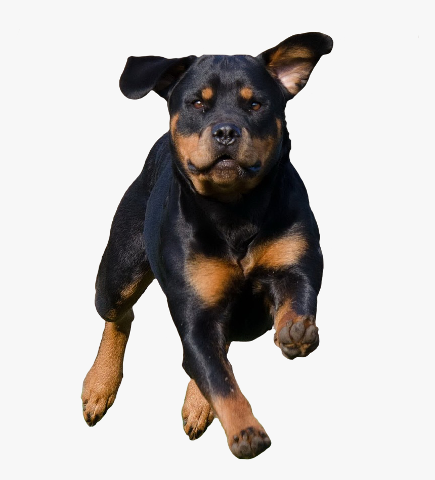 Running Dog - Dog Running Png, Transparent Png, Free Download