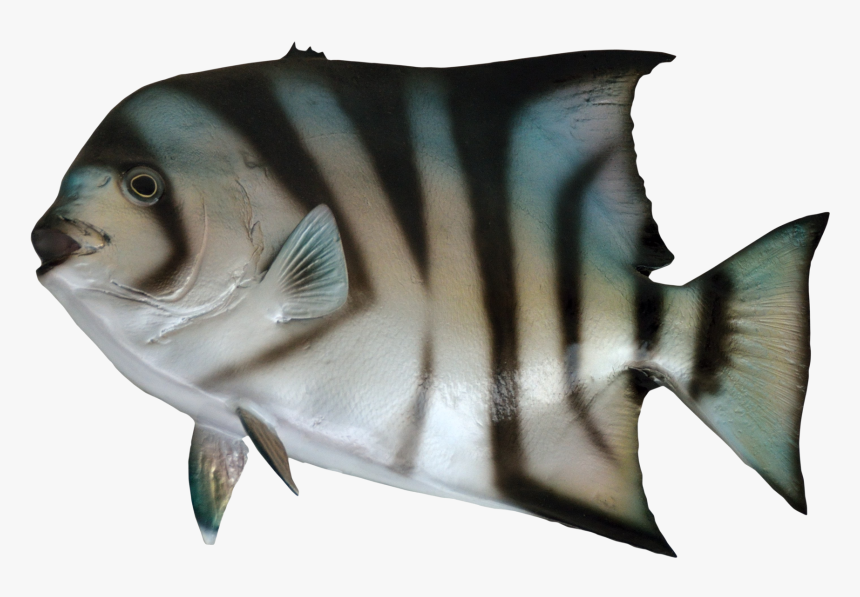 Fish For Sea Png, Transparent Png, Free Download