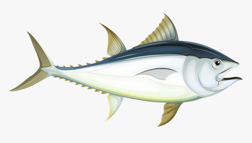 Fish, Sea, Tuna, Underwater, Water, Ocean, Animal - Fish In The Ocean Cartoons, HD Png Download, Free Download