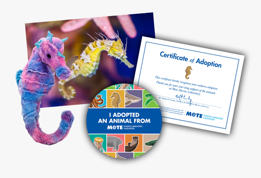 Items Included In Buddy Package - Adopt A Sea Turtle, HD Png Download, Free Download