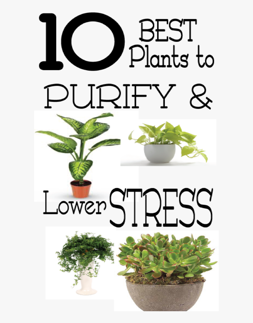 Good Plants For Stress, HD Png Download, Free Download