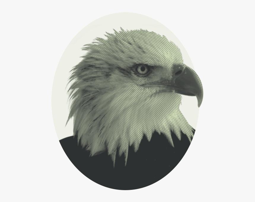 Eagle Png, Transparent Png, Free Download