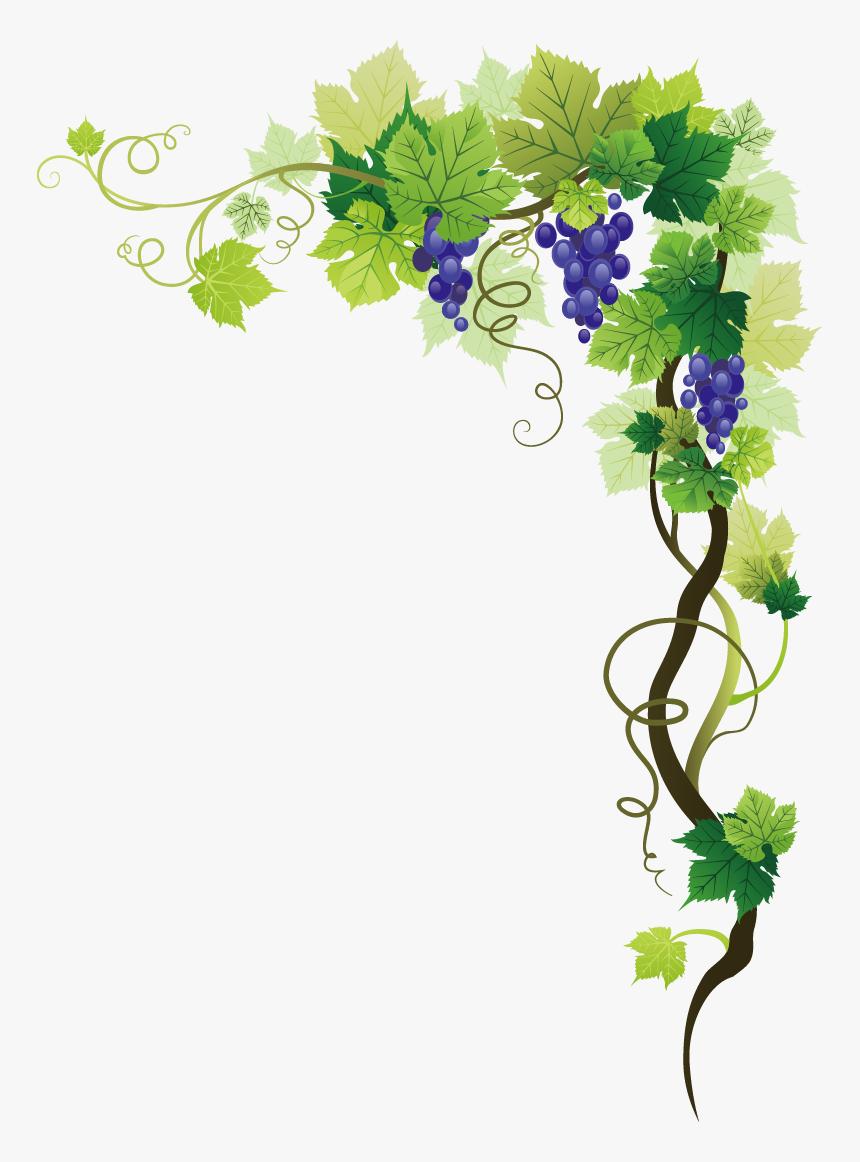 Common Grape Vine Picture Frame Clip Art - Grape Vine Transparent Background, HD Png Download, Free Download