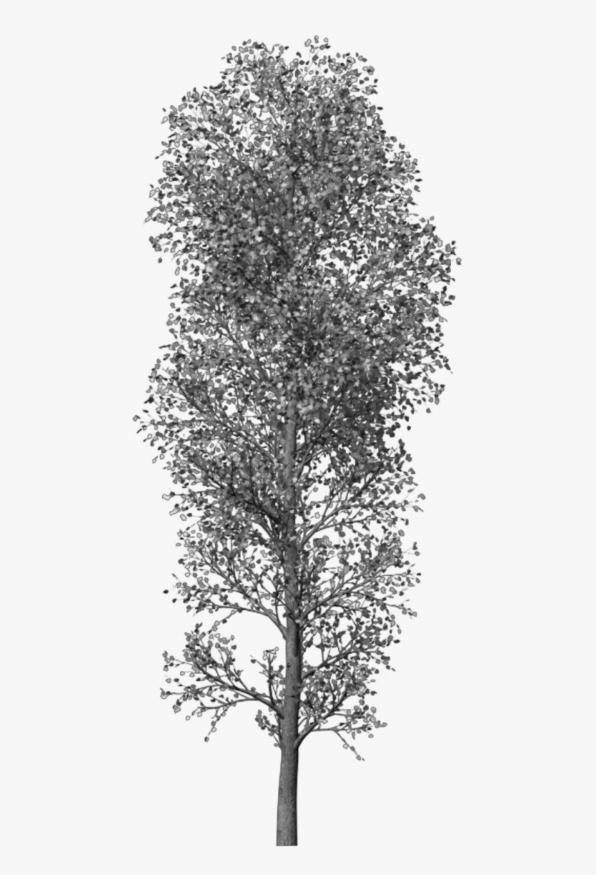 Transparent Photoshop Tree Png - Brush Tree Photoshop Png, Png Download, Free Download