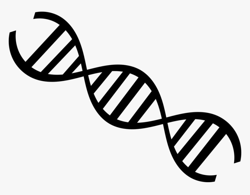 Biology Dna Genetics - Molecula De Dna Desenho, HD Png Download, Free Download