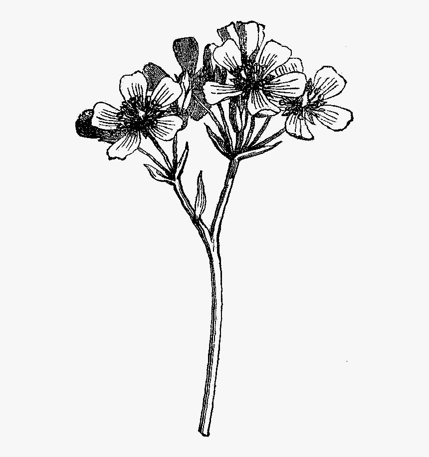 Digital Wildflower Downloads - Wild Flower Illustration Black And White, HD Png Download, Free Download