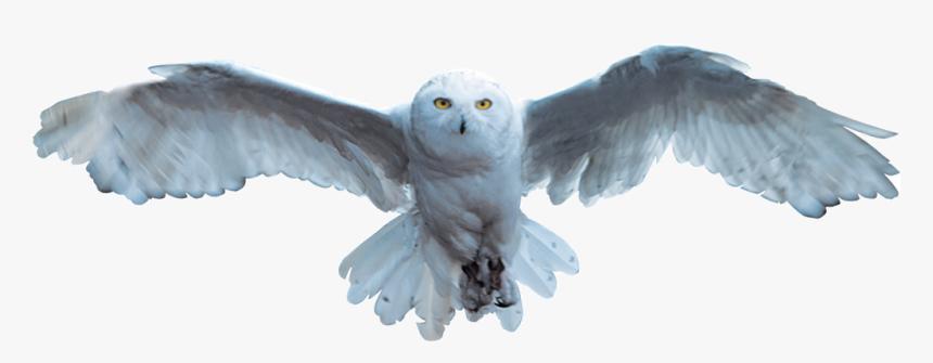 Harry Potter Hedwig Png - Harry Potter Owl Flying, Transparent Png, Free Download