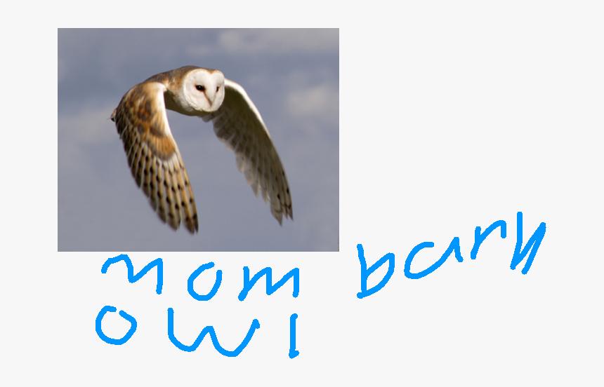 Transparent Sad Owl Clipart - Australian Masked Owl Flying, HD Png Download, Free Download