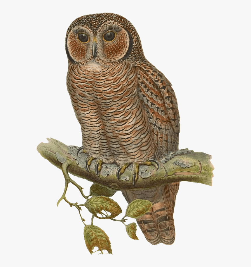 Owl Drawing - Owl With Blue Glasses, HD Png Download, Free Download