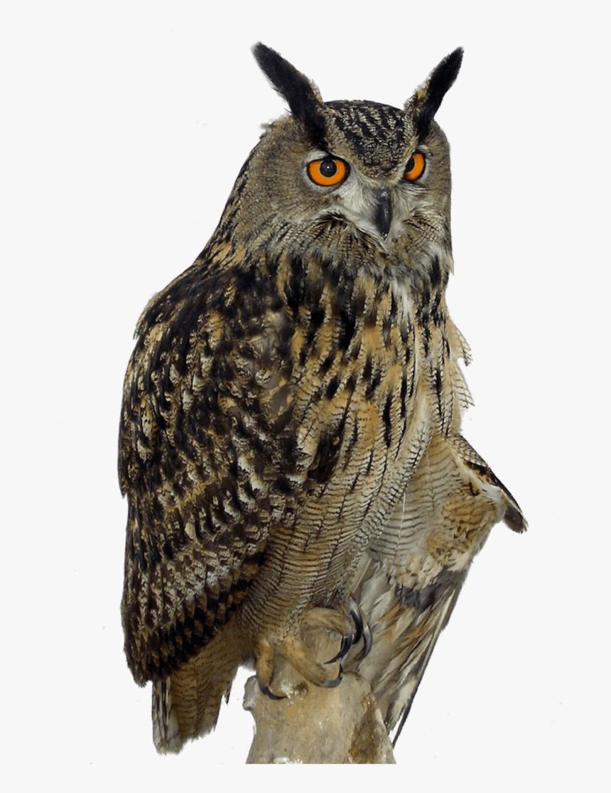 Transparent Owl Flying Png - Owl Png, Png Download, Free Download