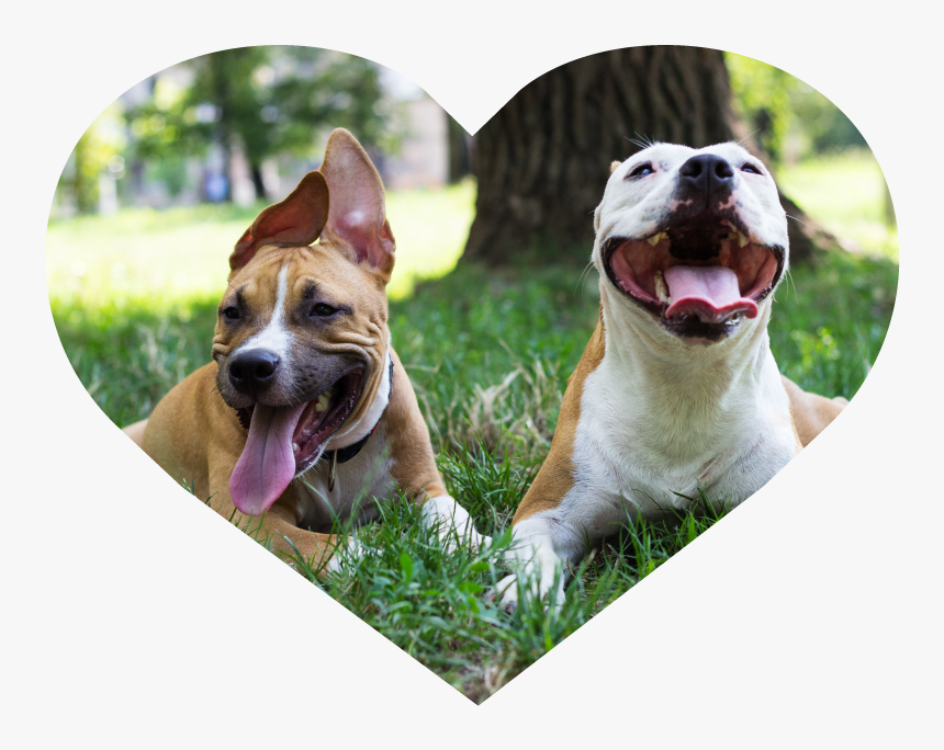 Dog Walking Heart Image 1 - Happy Dogs At Park, HD Png Download, Free Download