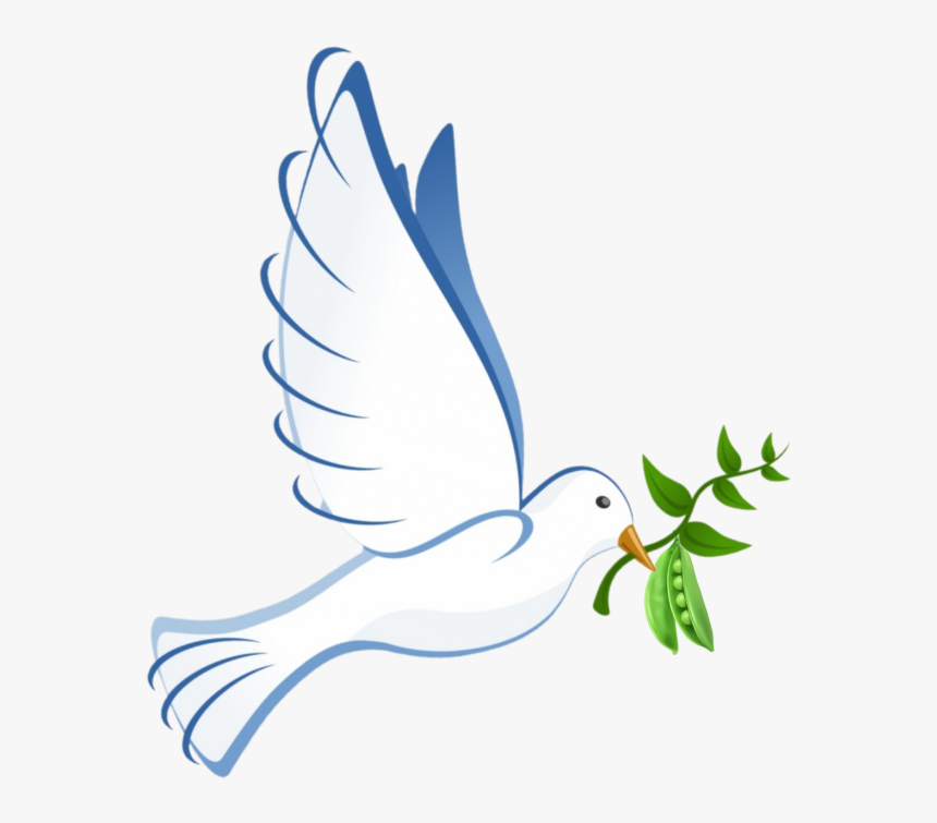 Seabird, HD Png Download, Free Download