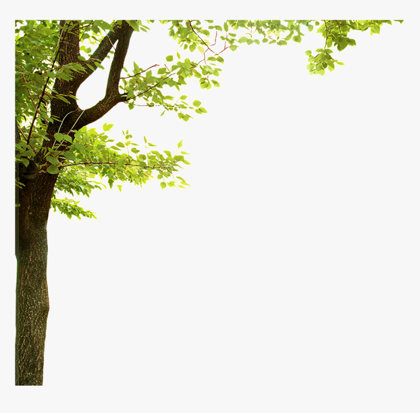 Forest Trees Transparent - Tree Corner Border, HD Png Download, Free Download