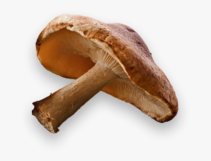 Shiitake Mushroom Transparent Background, HD Png Download, Free Download