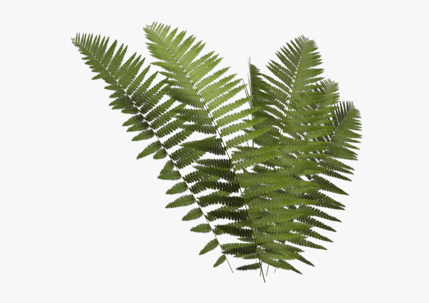 Thumb Image - Transparent Fern Png, Png Download, Free Download