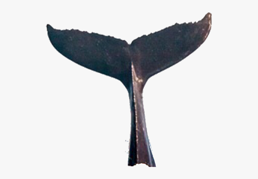 #whale #tail #whaletail #tailwhale #freetoedit #freetoedit - Real Whale Tail Png, Transparent Png, Free Download