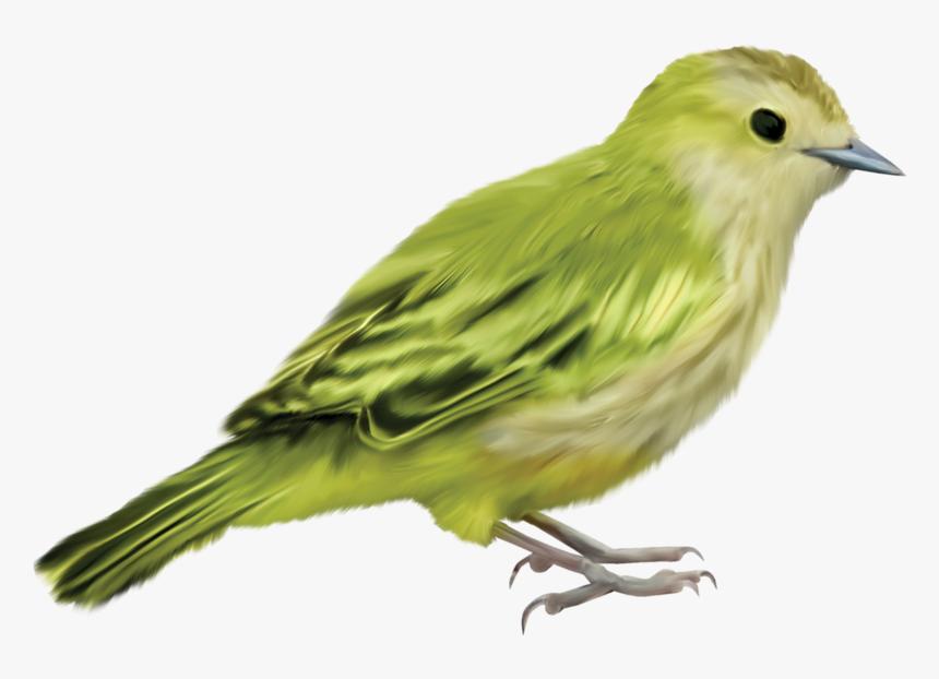 Beautiful Images, Parrot, Bird Crafts, Bird Art, Bird - Imagenes De Pajaros Png, Transparent Png, Free Download