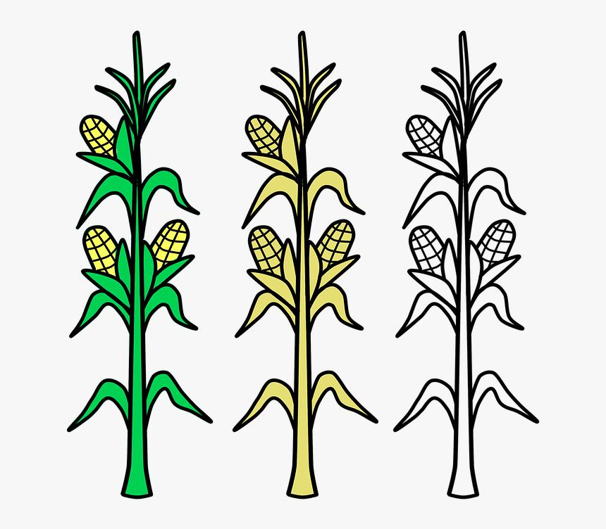 Corn, Field, Agriculture, Plant, Crop, Farm, Farmland - Draw A Corn Stalk, HD Png Download, Free Download