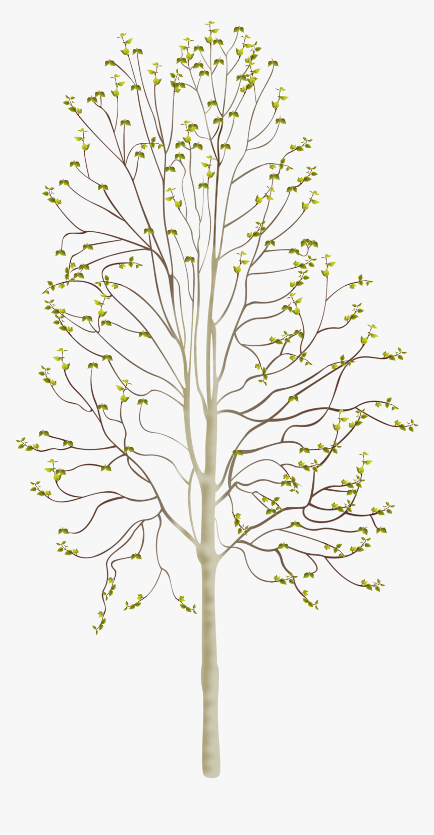 Birchtree Spring, HD Png Download, Free Download