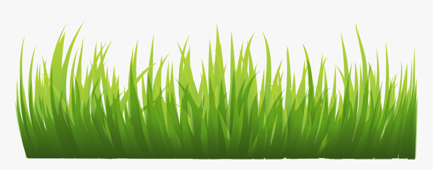Grass Images Pictures Clipart - Grass Vector, HD Png Download, Free Download