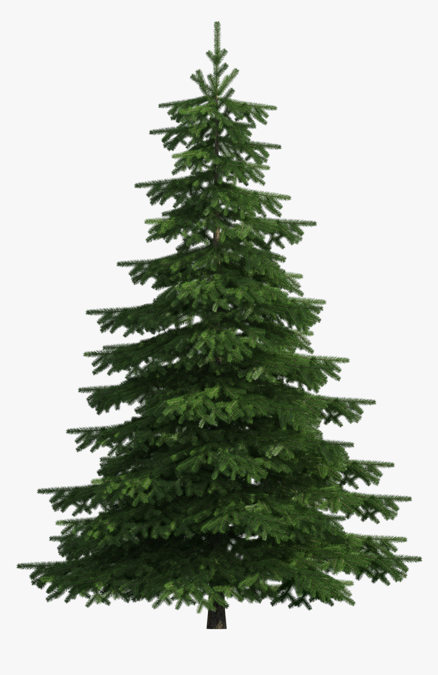 Realistic Pine Tree Png Clip Art - Pine Tree Png Transparent, Png Download, Free Download