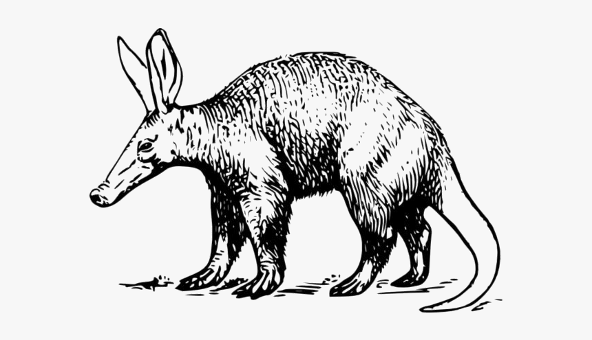 Aardvark Cartoon Png Transparent Images - Aardvark Png Clipart, Png Download, Free Download