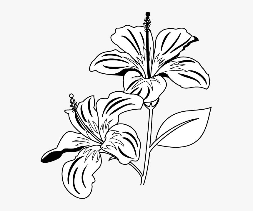 Gumamela Flower Clipart Black And White - Flowers Clipart Black And White Png, Transparent Png, Free Download