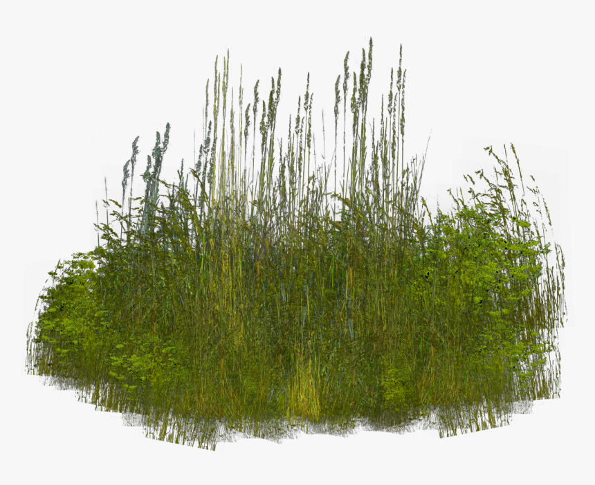 Grass Clip Art Shrubs Reeds Png Transparent Png Kindpng