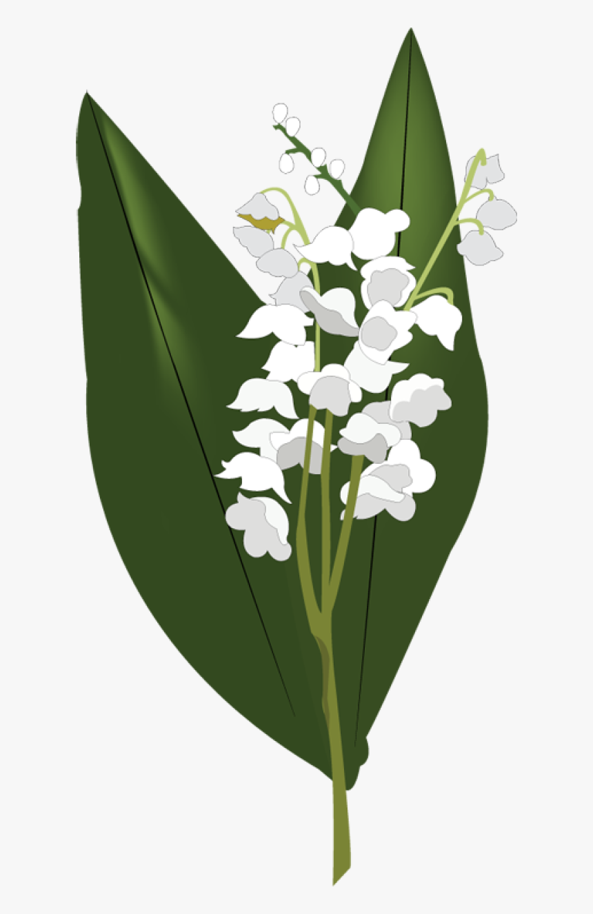 Lily Of The Valley Png Hd - Lilies Of The Valley Png, Transparent Png, Free Download