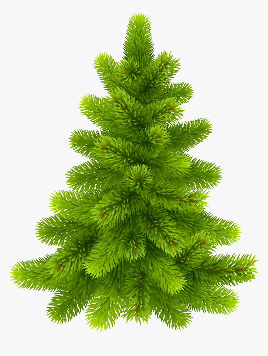 Pine Tree Png Clip Art - Pine Trees With No Background, Transparent Png, Free Download