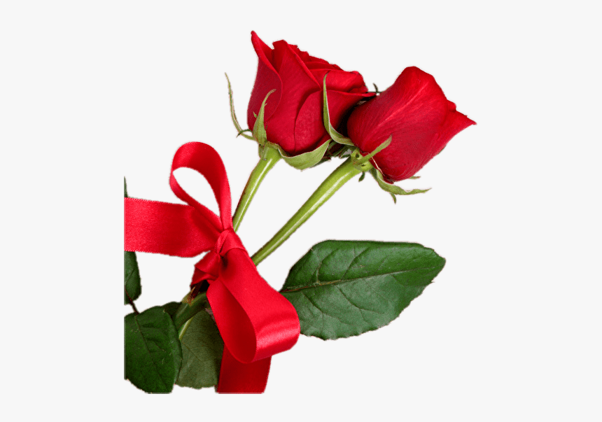 Bud - Red Rose On White Wood Hd Background, HD Png Download, Free Download