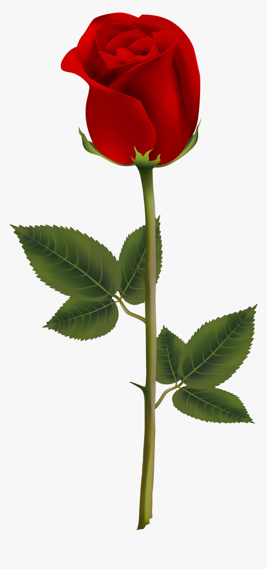 Transparent Background Red Rose Png Png Download Kindpng
