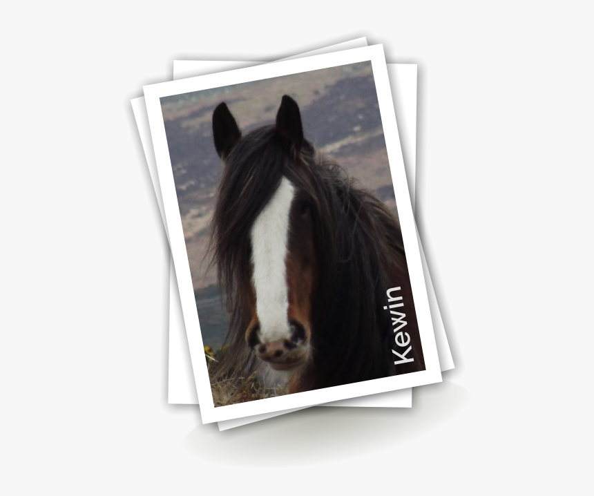 Transparent Horse Tail Png - Stallion, Png Download, Free Download