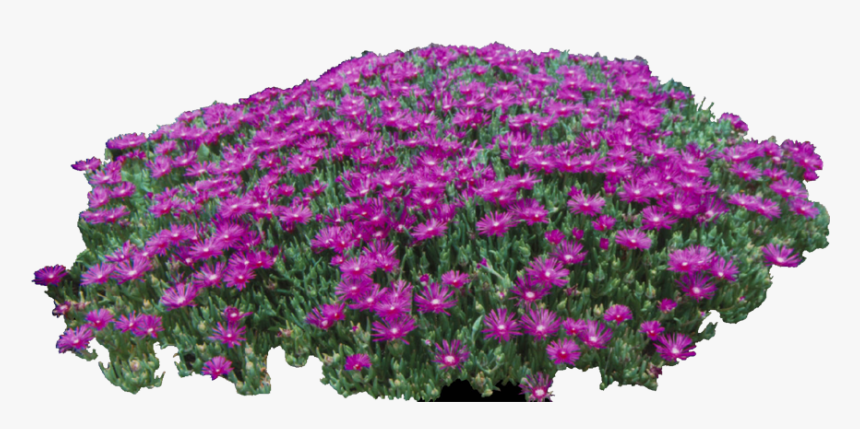 Free Cropped Photos Architecture Entourage Autocad - African Daisy, HD Png Download, Free Download