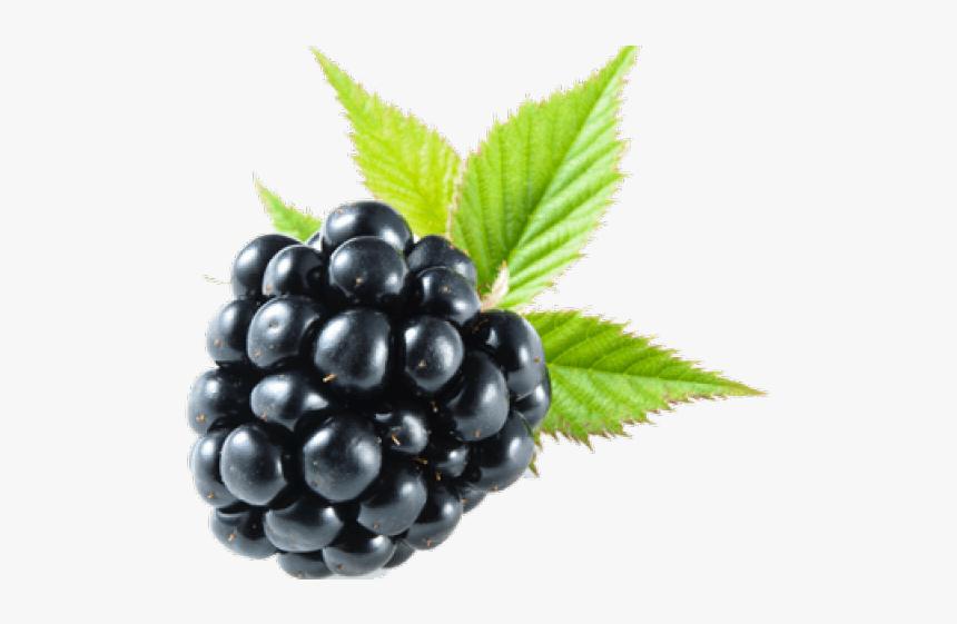 Blackberry Fruit Png Transparent Images - Blackberry Png, Png Download, Free Download