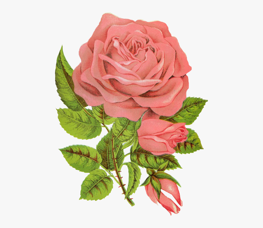 Overlay, Png, And Transparent Image - Followers Rose, Png Download, Free Download
