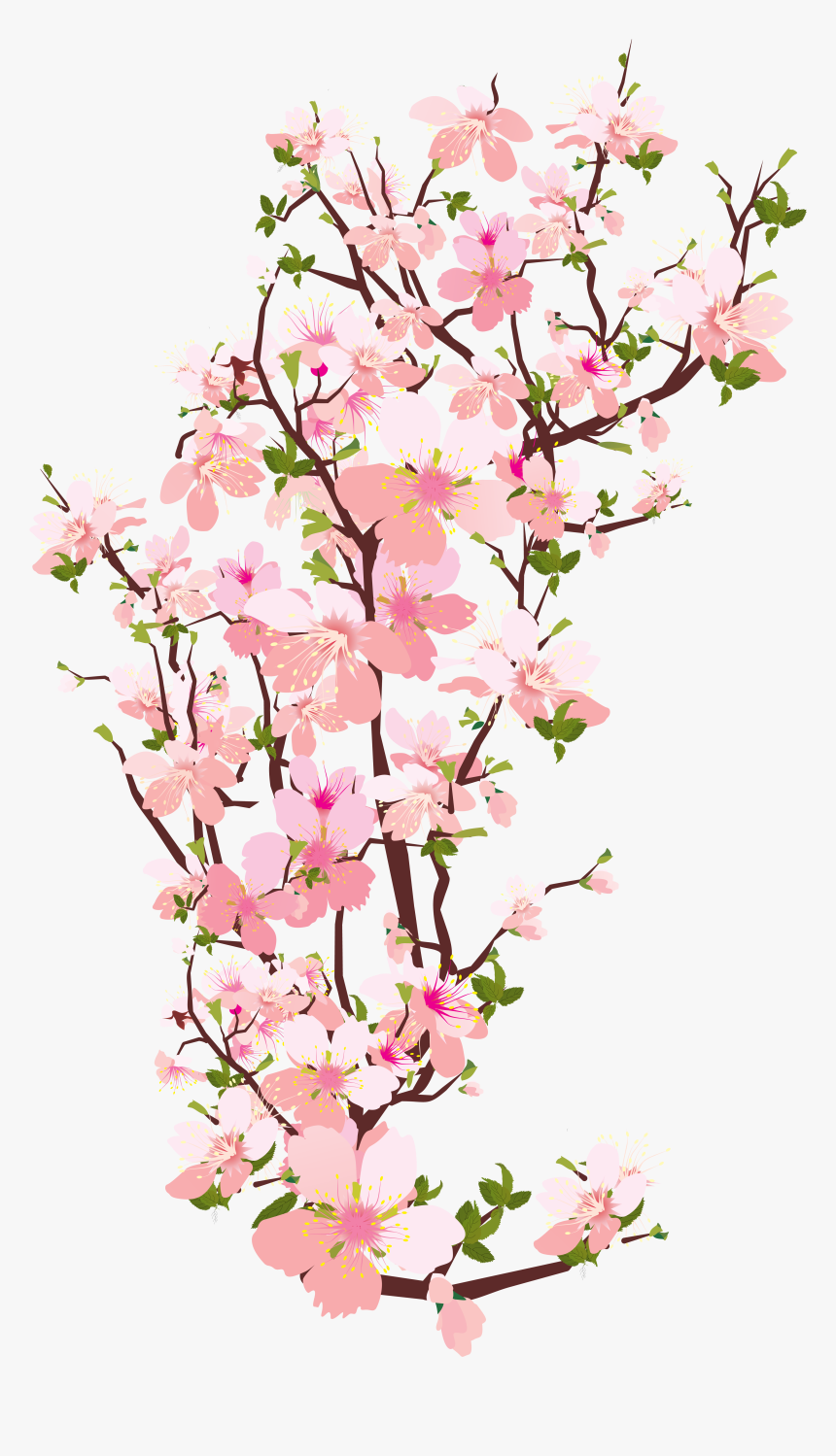 Branch Tree Cherry Blossom Clip Art - Cherry Blossom Branch Transparent, HD Png Download, Free Download