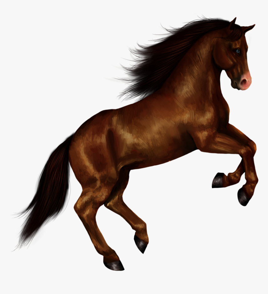 Download Horse Png Transparent Images Transparent Backgrounds - Transparent Background Horse Png, Png Download, Free Download