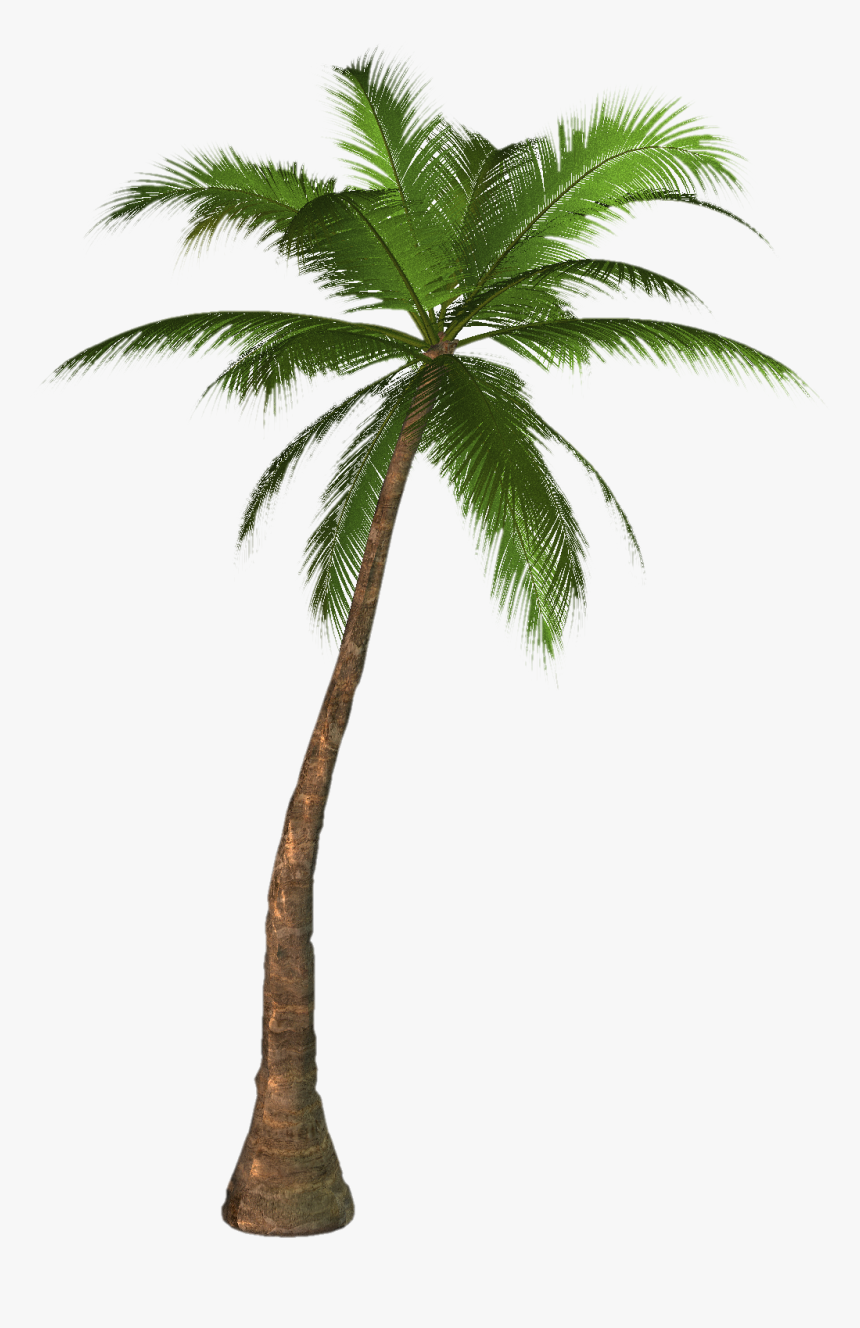 Image Result For Palm Tree - Palm Tree Png, Transparent Png, Free Download